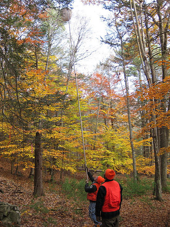 Mike Devine, Maine Forest Service supervisory entomologist, takes a sample of hemlock needles using a basket collection method at Kittery Point, aided by Greg Bjork, MFS entomology technician. Elongate hemlock scale, an invasive pest that can cause hemlock mortality, was found Tuesday for the first time in a natural setting in Maine.