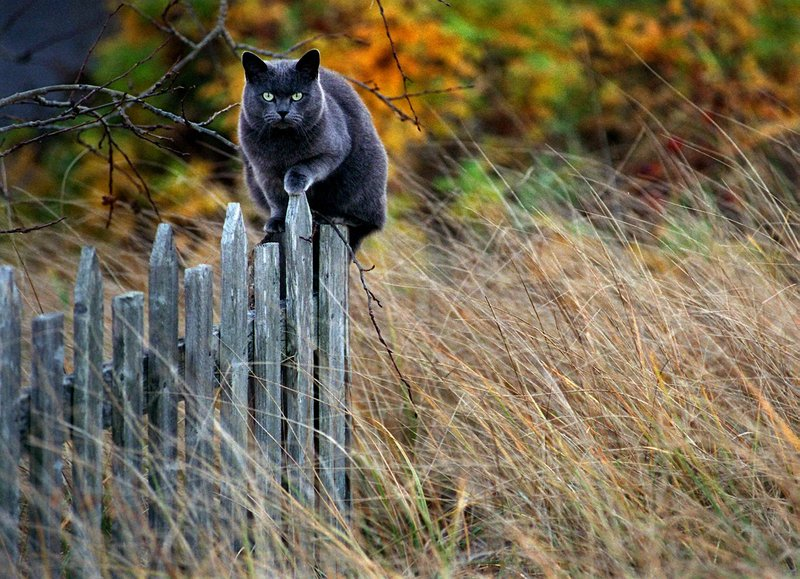 Whether feral or owned, cats that go outdoors live shorter lives and kill birds and small animals by the millions.