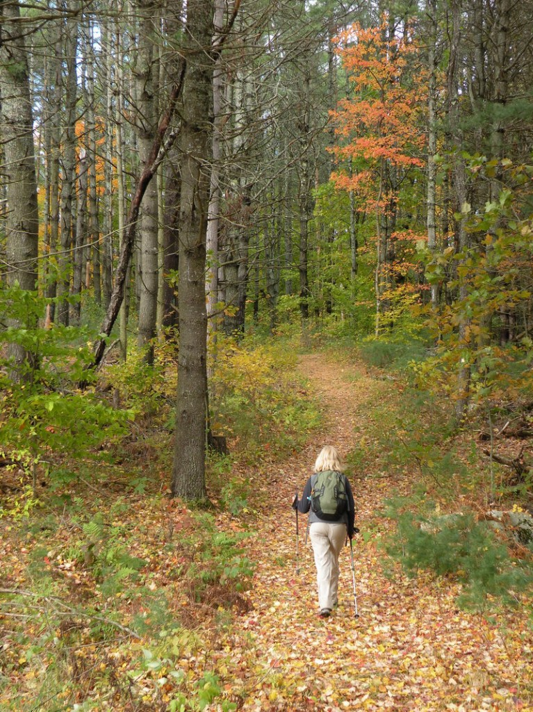 At the Curtis Homestead Conservation Area in Leeds, trails provide three miles of pleasant hiking through varied woods. The property was donated to the Kennebec Land Trust by former Gov. Kenneth Curtis and his sister.