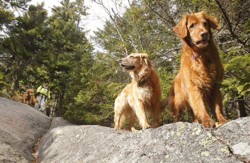 Judy Higgins heads down the trail with her three frequent hiking companions, C.J., Abby and Molly.
