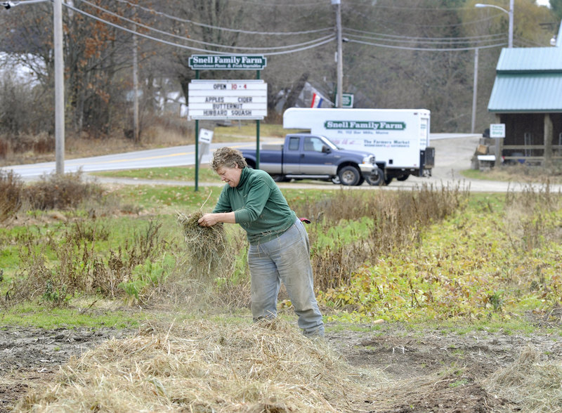 Ramona Snell spreads hay over newly planted garlic at her Snell Family Farm in Bar Mills this month.