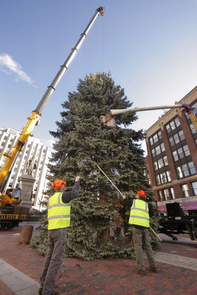 Chris Ingram, left, and Jay Ash-Cuthbert, arborists with Portland Public Services, untangle a guy wire Thursday from a 55-foot blue spruce being set up in Monument Square.