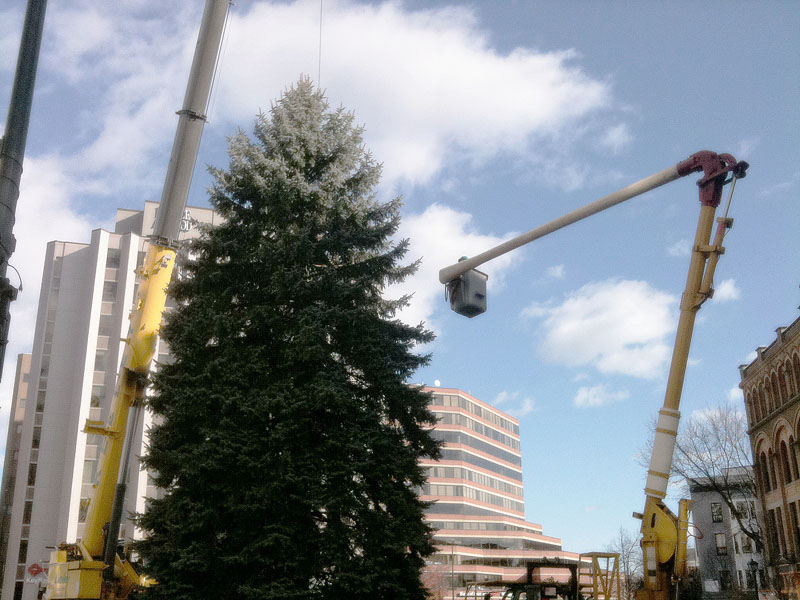 The 50-foot Colorado blue spruce was donated anonymously by a Portland family. The tree will be lit with over 1,500 LED lights donated by Efficiency Maine.