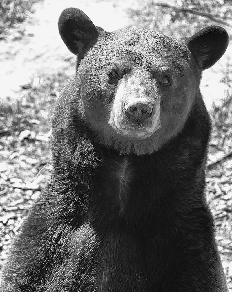 True sportsmen would never bait or hound a bear, readers say.