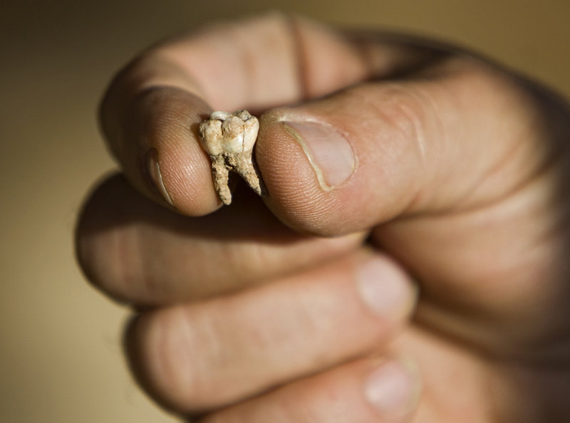 Professor Avi Gopher of the Institute of Archaeology of Tel Aviv University holds an ancient tooth that was found at an archaeological site near Rosh Haain in central Israel.