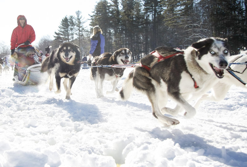 Sled dogs kick off Saturday while giving rides on Highland Lake during the Maine Lakes Mushers Bowl and Winter Carnival in Bridgton. The event concludes today.
