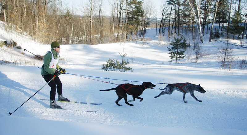 A skier gets an assist at Five Fields Farm on Saturday during the two-dog skijoring event at the Mushers Bowl and Winter Carnival in Bridgton.