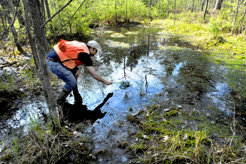 A researcher lifts salamander eggs from a vernal pool in York County. Readers support the pools' continued protection.