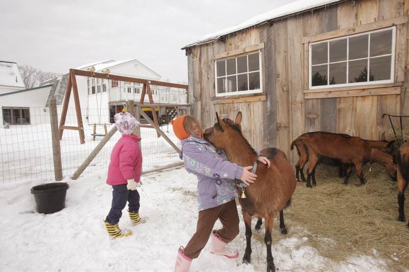 Olivia Proulx, 6, of Gorham reacts to a kiss from Ro-Ro, one of the family's four Oberhasli goats. The family is hoping to convince the town to change an ordinance that now prohibits livestock on lots smaller than 6 acres. At left is Olivia's younger sister, Rozalyn.