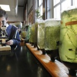 Marc Korobkin uses a microscope to examine bacteria from a micro-ecosystem in an AP biology class at Portland High School Thursday.