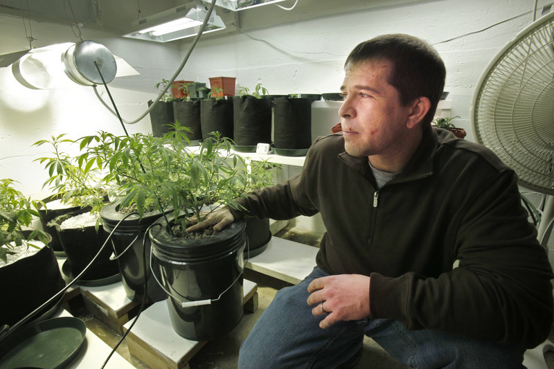 Ron Fousek works about 30 hours a week cultivating medical marijuana for his five patients. Caregivers may have up to five patients, may have up to six flowering plants for each of them and must pay a $300 fee per patient.