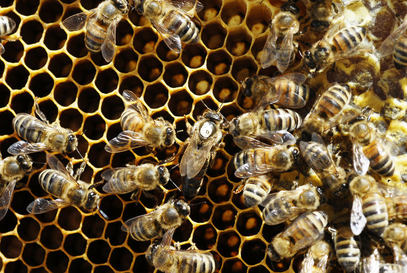 About one-third of foods we eat depends on bee pollination, so news of colony collapse disorder devastating bees around the world is a serious concern for farmers and beekeepers.