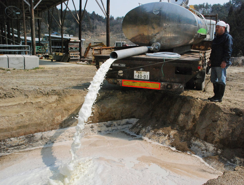 A farmer dumps raw milk Wednesday in Kawamata, Japan, due to possible health risks from elevated levels of radiation from the damaged Fukushima Dai-ichi nuclear power plant.