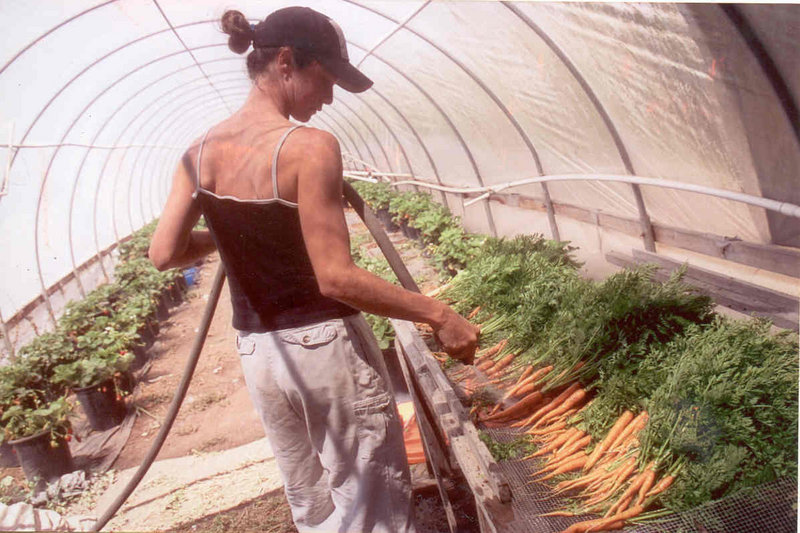 "In a scene from ""The Greenhorns,"" a documentary that explores the lives of young farmers, Amy Courtney of Freewheeling Farm in California rinses carrots in a greenhouse."