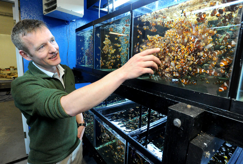 Soren Hansen, president of Sea and Reef Aquaculture in Franklin, points to a tank of clownfish.