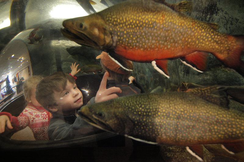 Asa Paul, 4, of Topsham examines trout from a bubble inside an aquarium Saturday.