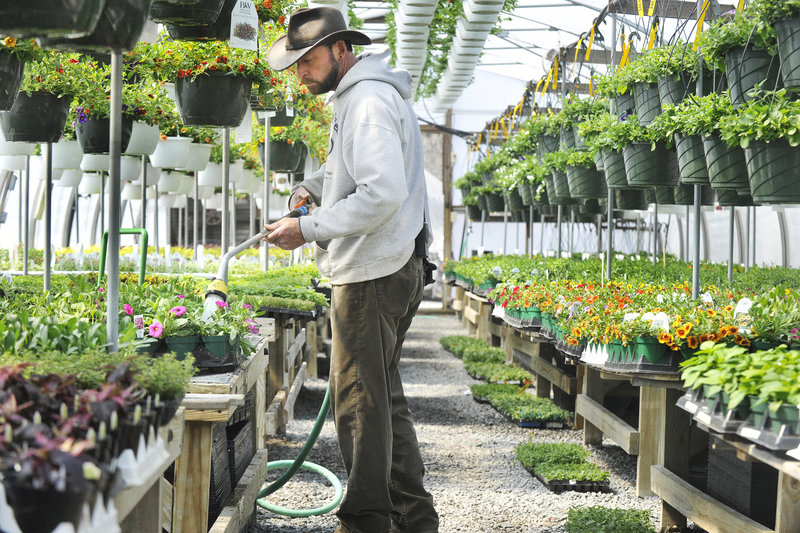 Mark McGarity waters plants in one of the greenhouses.