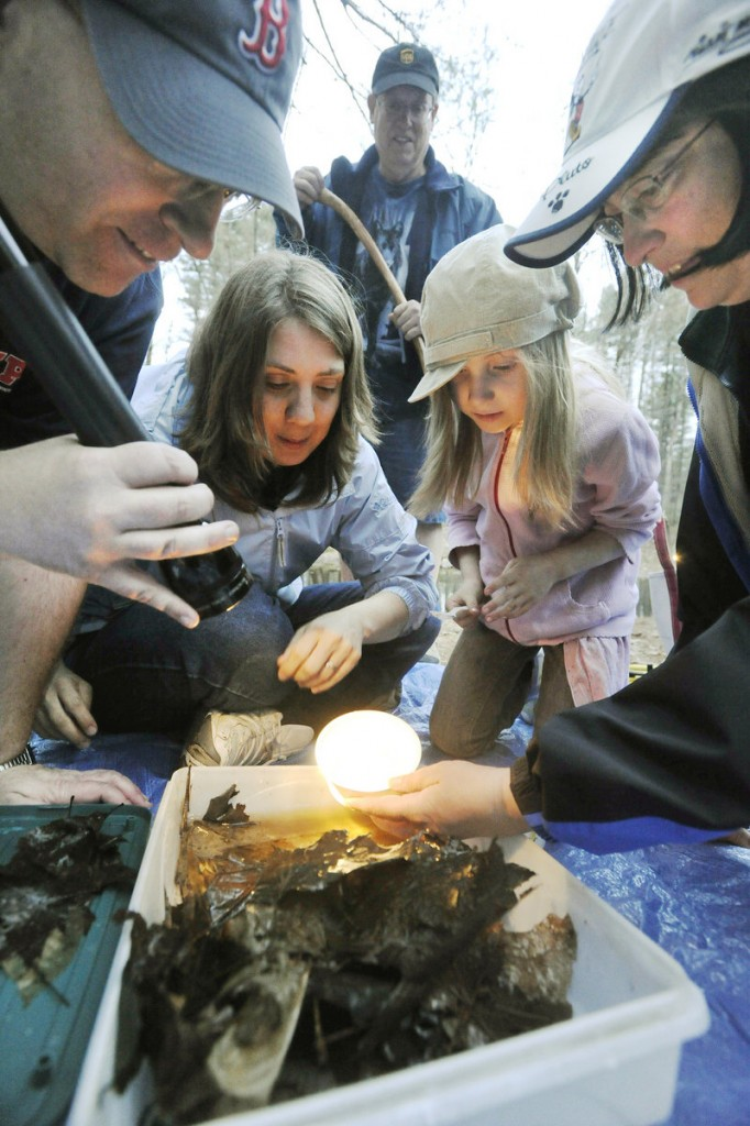 A group looks at some tiny creatures caught in the sanctuary.