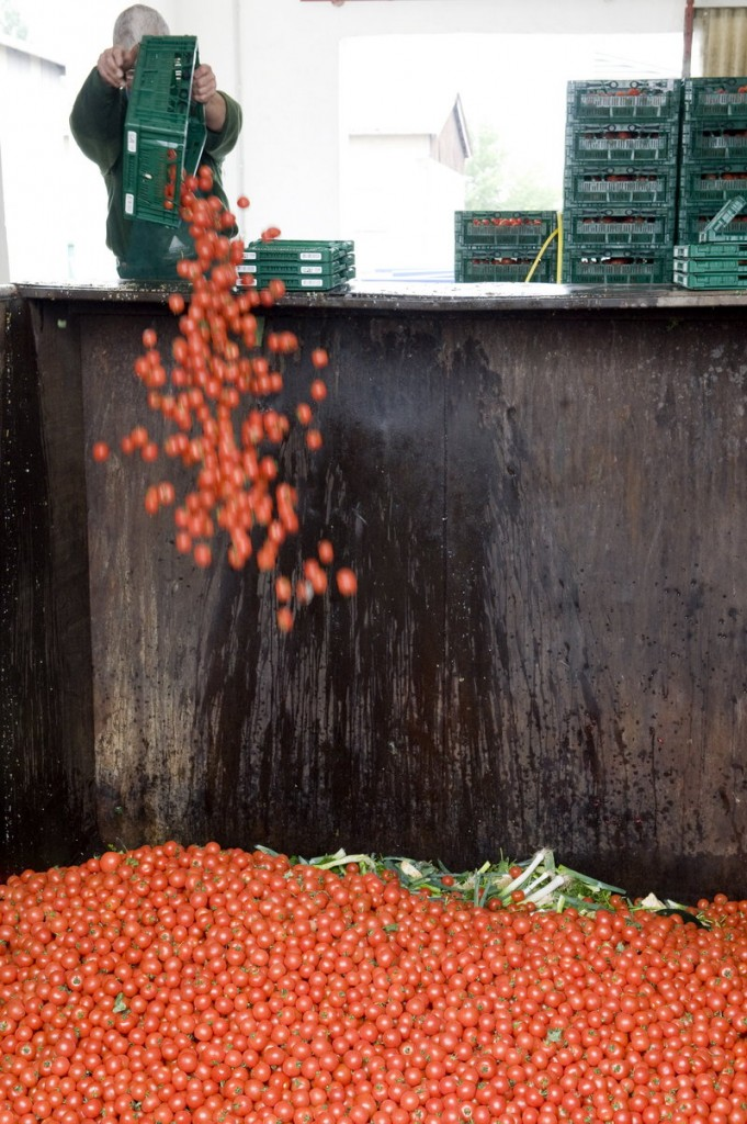 An employee of a vegetable company discards tomatoes in Werder, Germany, on Tuesday. With the market still in turmoil amid the E. coli threat, distributors continue to dump produce.