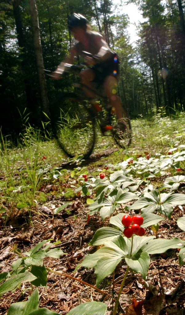 A rider rockets down a trail in Carrabassett Valley. A highlight of the season there is the Backcountry Cycle Challenge on July 24.