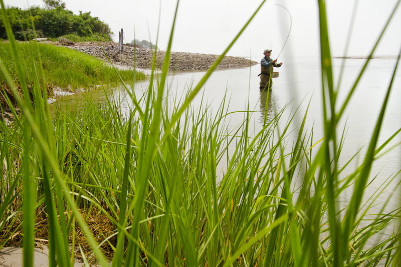 David Quenneville of Huntington, N.Y., casts for striped bass at Timber Point in Biddeford. A coalition of conservation groups hopes to make 97 acres in the area part of the Rachel Carson National Wildlife Refuge.
