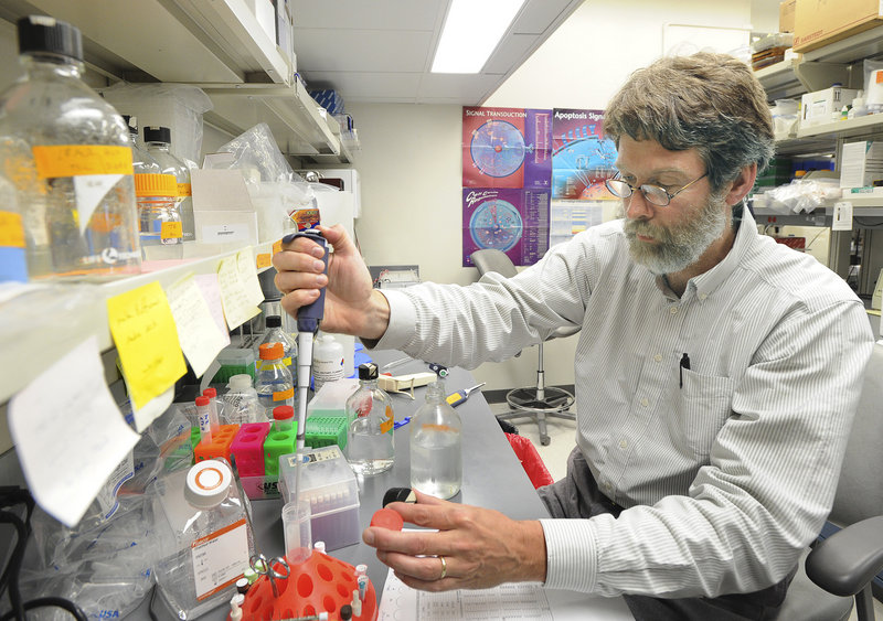 Research assistant Tom Sproule works at Jackson Lab in Bar Harbor. Scientists and professors in Jackson Lab's 36 research programs study the role of genetics in metabolism, cardiovascular function, reproductive biology, birth defects, aging, deafness, obesity and a range of disorders. They also study cancer, HIV-AIDS, lupus, diabetes and other conditions.