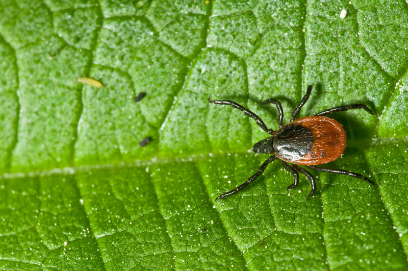 Ticks can be kept at bay if you keep your grass cut and buffer your yard with mulch or crushed stone.