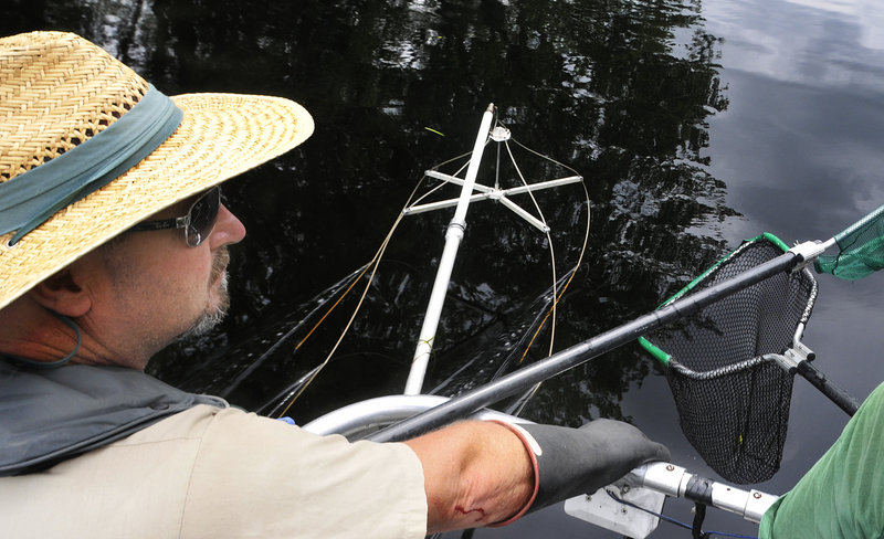 With electrodes and fishing nets dangling in the water, Brian Campbell, assistant regional biologist for Inland Fisheries and Wildlife, electro-fishes for Pike on Pushaw Stream.