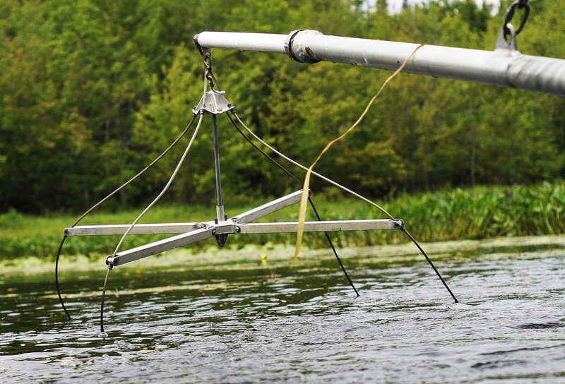 Biologists use electrodes to shock fish and collect them with nets in an effort to find northern pike.