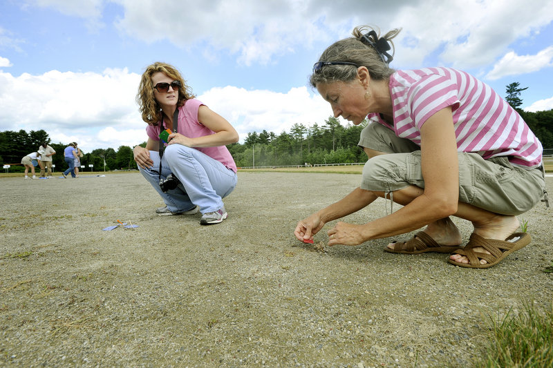 Jan Santerre, director of the emerald ash borer detection project, and volunteer Kathy Bouchard of Scarborough, right, set traps over wasp nests Wednesday on a baseball diamond at Freeport Middle School. The traps are used to collect the prey that the wasps are bringing to the nest. They'll know the emerald ash borer has arrived in Maine if one shows up in the traps.