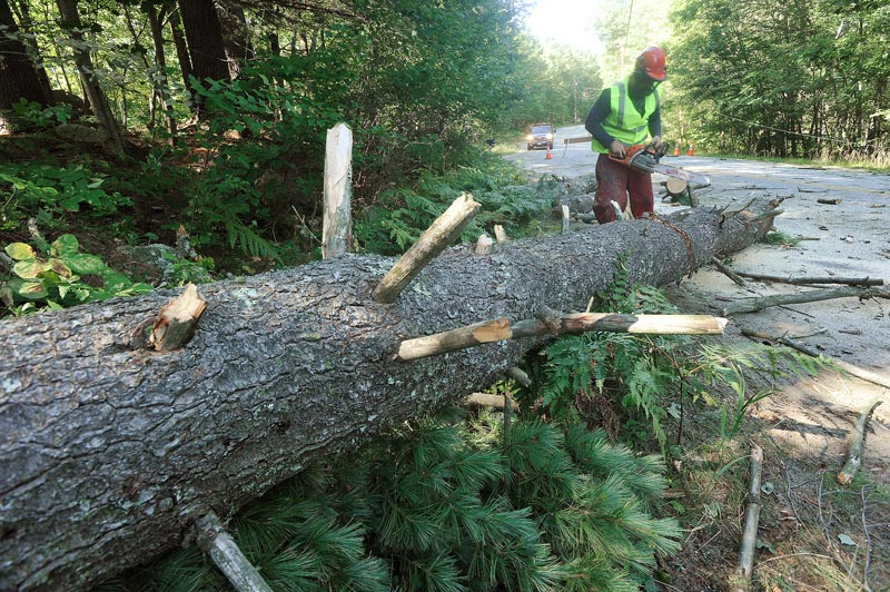 Storm damage in the Lakes Region from Tropical Storm Irene includes this large pine that fell on power lines and blocked the Egypt Road in Gray. A worker from Lucas Tree Service cuts up the trunk today for removal.