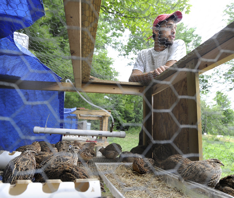 Chad Conley, seen here with quail chicks, manages the Miyake Farm in Freeport.