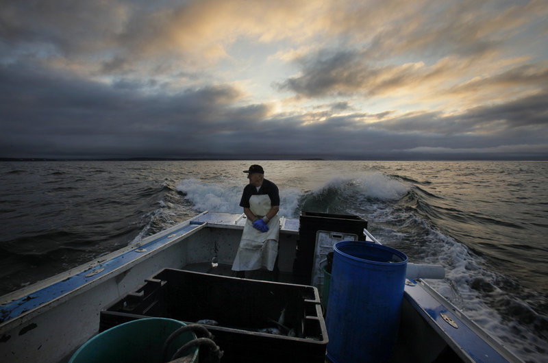 """Howard Gray, 77, sits in the stern of his lobster boat while his son Charlie is at the helm. The law allows Charlie Gray, an apprentice who is on a long waiting list to get his own lobstering license, to fish on his father's boat as long as his father is aboard. """"If I don't come out, he can't come out,"""" says Howard Gray. The Grays have lobbied the Legislature for a change in the rules."""