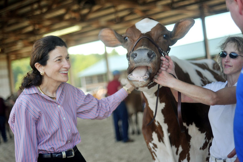 """U.S. Sen. Olympia Snowe handles an award-winning Holstein cow while courting voters at the 193rd Skowhegan State Fair on Wednesday. """"No one wants to govern anymore. They just want to fight; it's all about politics,"""" said Snowe, a Republican who may face a primary challenge in her own party next year but enjoys considerable support among Democrats."""