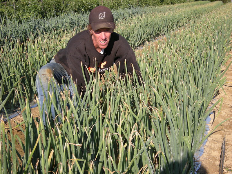 Rusty Dewsnap of Dresden tends to some of the 25,000 organic onions he sells locally at Goranson Farm.