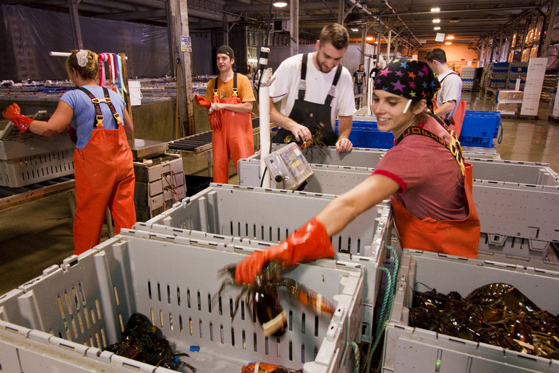 Ready Seafood Co. workers, including Faith Hammond, right, pack lobster on the Maine State Pier. Ready's request to extend its lease through 2015 started a vigorous debate at a Community Development Committee meeting.
