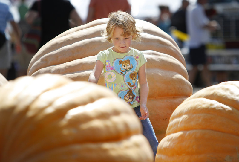 Shyla Gailey, 5, of Westbrook checks out the large pumpkins entered in the pumpkin and squash weigh-off on the opening day of the fair on Sunday.