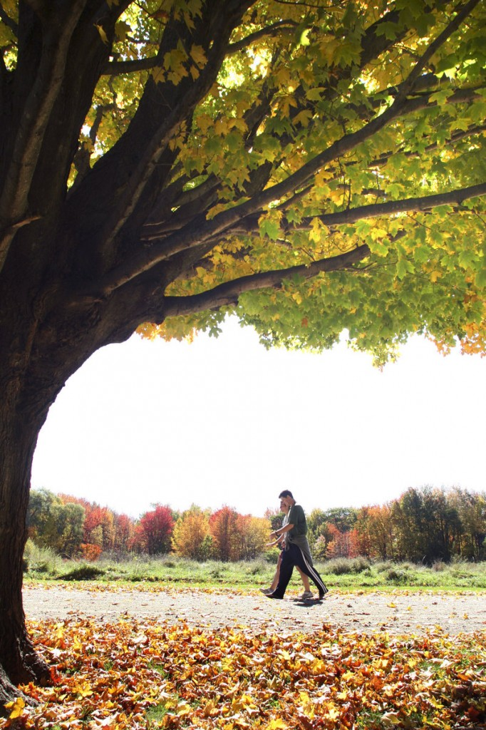 Gilsland Farm in Falmouth, the headquarters of Maine Audubon, is one of several sanctuaries close to Portland where a fall walk leads through a range of foliage colors.
