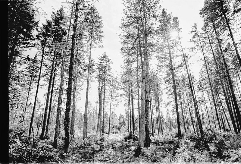 The debate about the future of Maine's forests has needlessly pitted environmental concerns against the interests of the people who need to make a living.