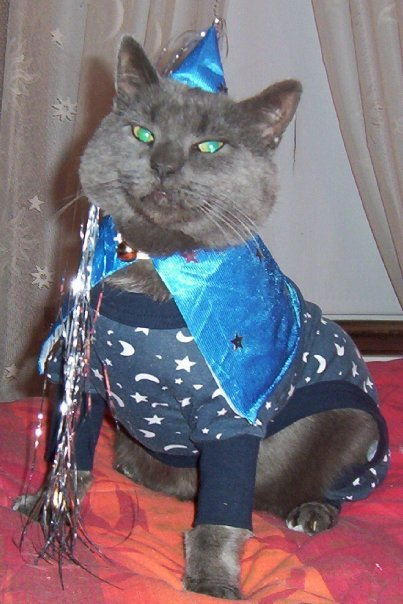 Bingo the cat, in his blue wizard costume, belongs to Hilda Taylor of Portland. His costume pairs dog pajamas with a doll's princess outfit.