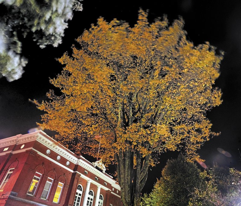 A massive 120-year-old elm tree stands tall outside the town hall in Castonguay Square in Waterville. When City Manager Mike Roy noticed some upper limbs were dying, he consulted with tree experts for help.