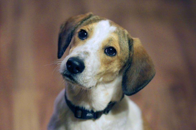 """The story of Daniel, now better known as the """"Miracle Dog,"""" led to more than 100 offers of adoption from around the country."""