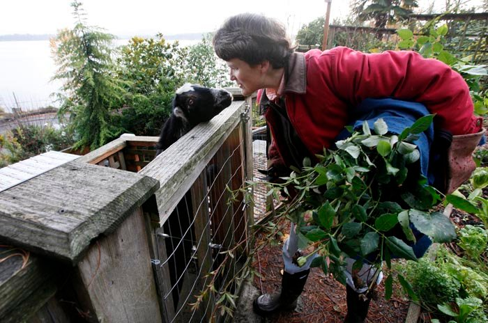 Jennie Grant leans down to greet Eloise before bringing in an armload of cuttings for a morning feeding in Seattle on Monday.