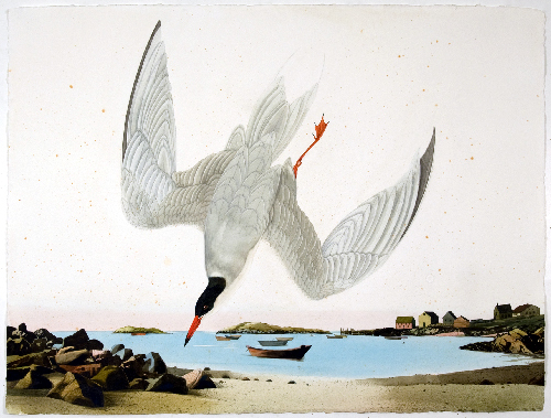This 2010 artwork shows a tern on Monhegan Island. According to researchers, Maine baby terns are dying in record numbers, mostly due to starvation.
