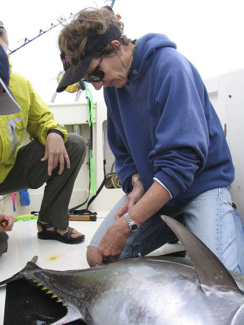 This summer 2011 photo shows research professor Molly Lutcavage measuring a young tuna before releasing it back into the waters off the Massachusetts coast. Lutcavage is director of the Large Pelagics Research Station that was dedicated today at Hodgkins Cove in Gloucester, Mass.