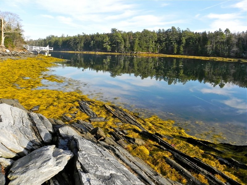 A long, narrow cove on the southern end of Birch Island, between Merepoint Bay and Middle Bay, provides calm water and with views of spruce and fir trees along the shore.