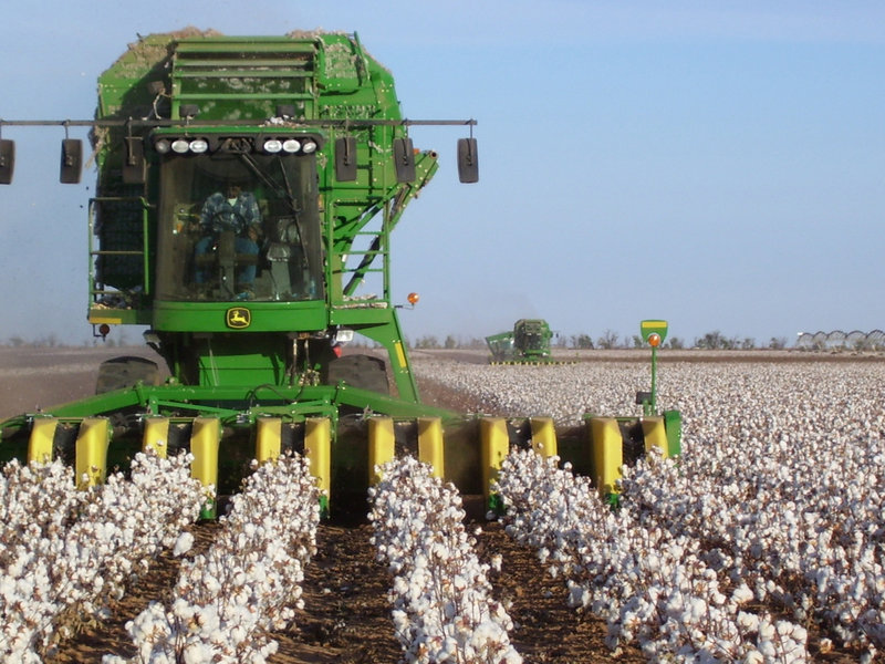 Cotton is harvested at Heffington Home Place near Lubbock, Texas. Brad Heffington used to hedge shifts in cotton prices by using the futures market, but says financial speculators and volatile prices have made that market unusable.