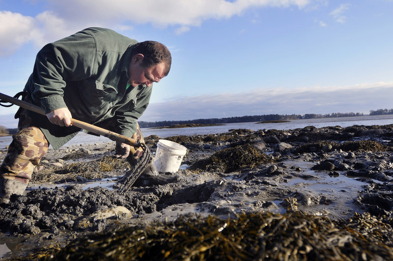 Sanford Metayer of Lewiston digs for clams in the tidal mudflats at Wolfe's Neck Woods State Park in Freeport last Sunday. A volunteer at the park, Metayer educates visitors about digging and demonstrates proper techniques at Wolfe's Neck, where clamming is free. It's also one of the activities Maine's state parks offer to visitors, even in winter.