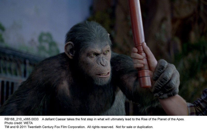 "Andy Serkis as the computer-generated ape Caesar in ""Rise of the Planet of the Apes."""