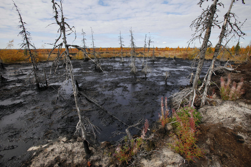 Dying trees are often a tell-tale sign that there has been an oil spill on the tundra. A harsh climate and aging equipment make large spills routine.